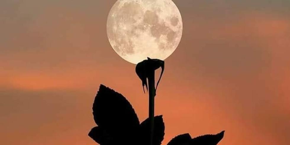 Elemental Expression Vol. 10 Moon Flower