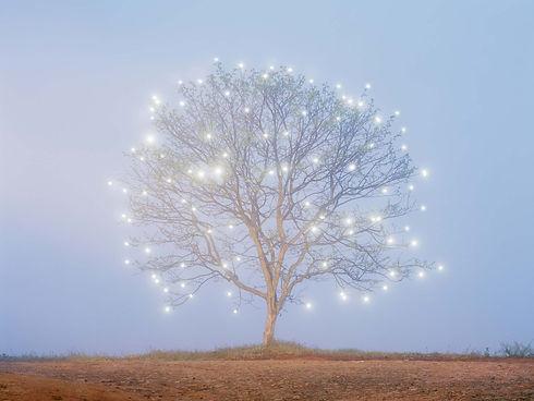 astrology tree.jpg