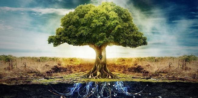 subconscious tree_edited.jpg