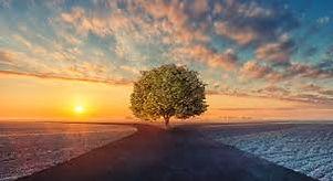 tree fork.jpg