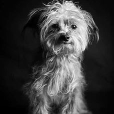 dog grooming pet spa bradford, pa