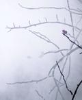 Stencil art - Darkling Thrush