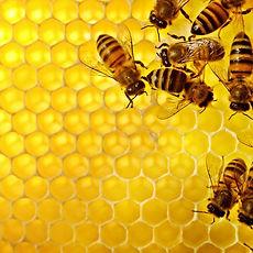 Bees-on-Honeycomb_edited.jpg