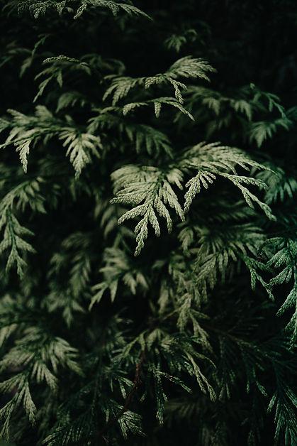 plants-5377557_1920.jpg