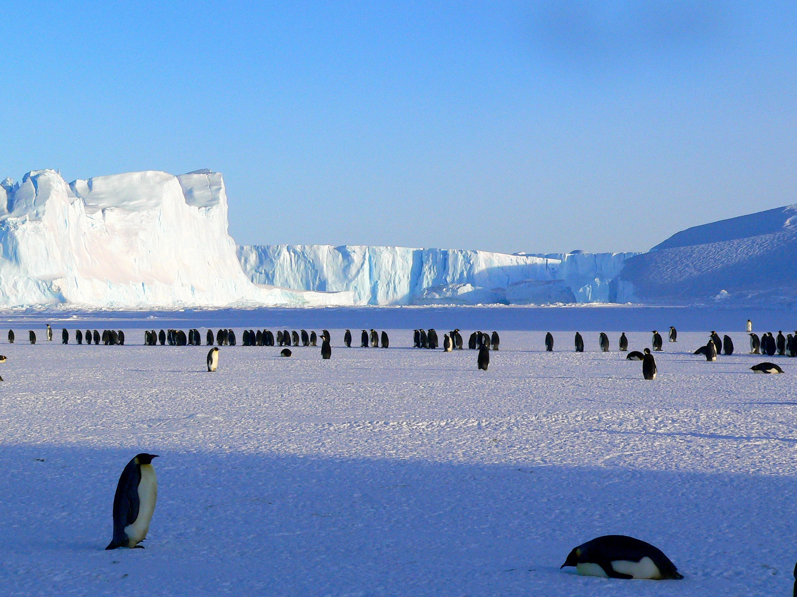 penguins-429136