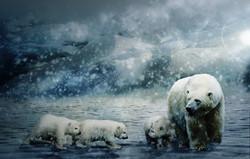 polar-bear-3413072
