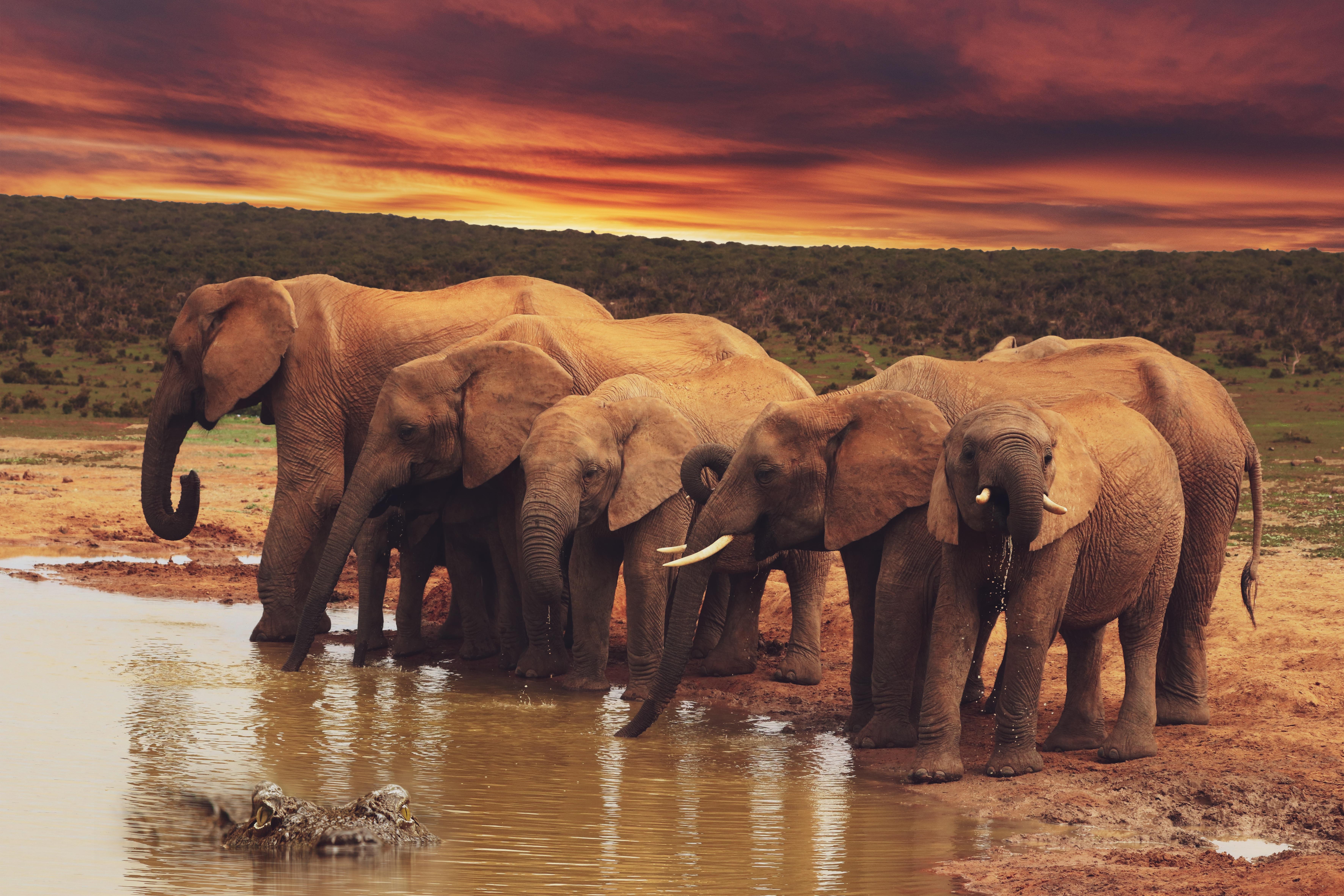 elephants-4827279