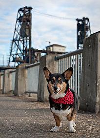 Lucas steel bridge-2.jpg