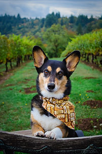 winery portrait.jpg