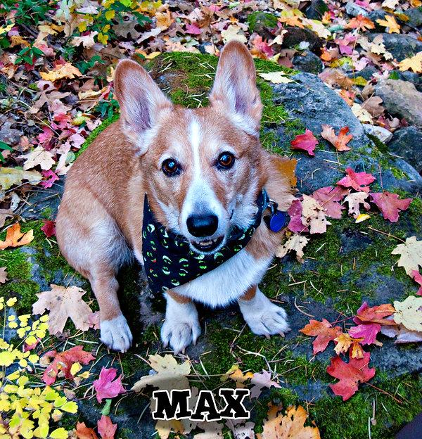 Max in his Halloween bandana