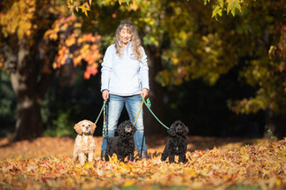 my three dogs.jpg
