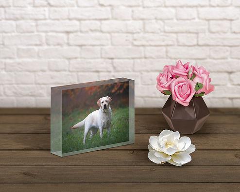 Blondie_acrylic block on table.jpg