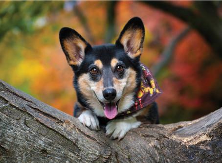 Benefits of Hiring a Professional Dog Photographer