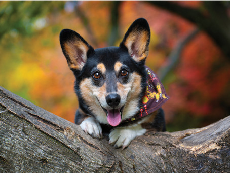 Benefits of Hiring a Professional Dog Photographer