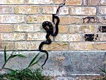 Brick Repair Infestation