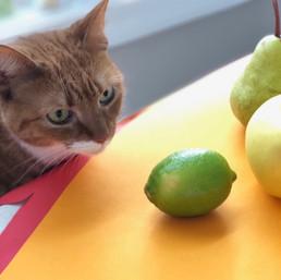 fruit photoshoot