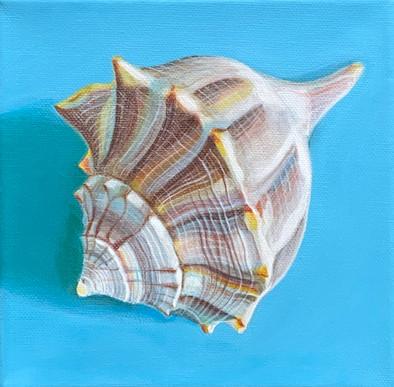 Shell 1