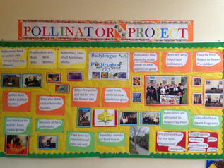 Pollinator Project