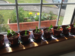 Our planting update......
