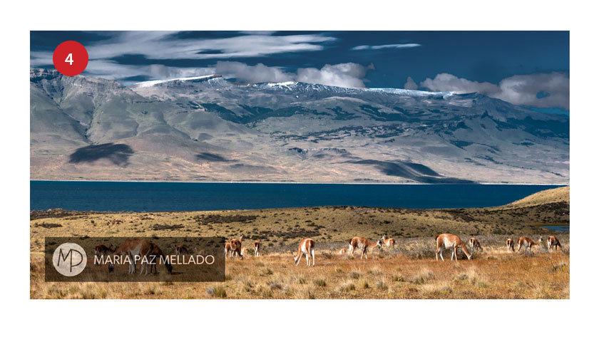 Postal Torres del Paine - Fauna Sierra del Toro