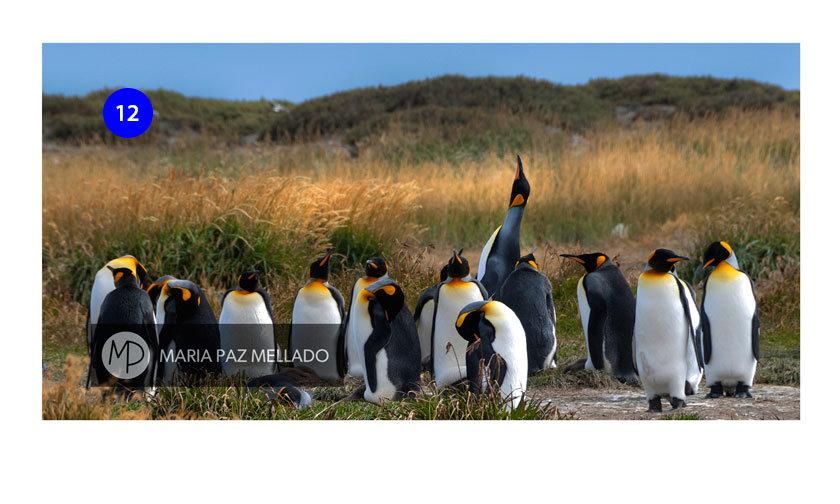 Postal Chile - Pingüinos Rey
