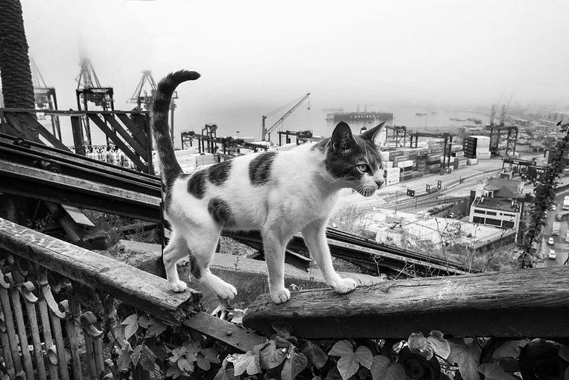 Gato Porteño B&N