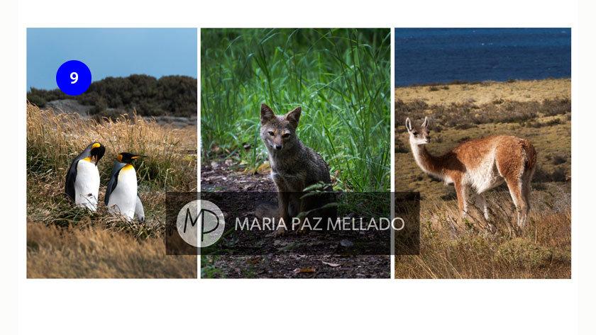 Postal Chile - Fauna Chilena