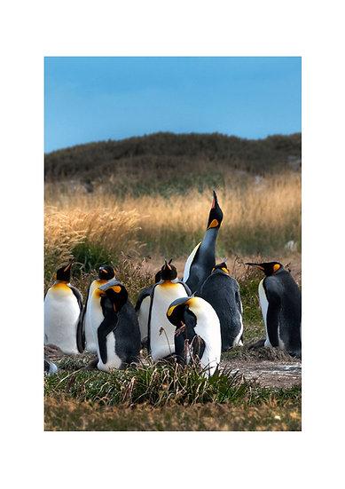 Familia de Pingüinos Vertical