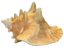 pngkey.com-shell-png-1052804.png