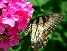 my butterfly photo3.jpg