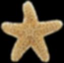 starfish_PNG25.png