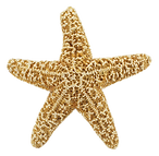 starfish_PNG25.png