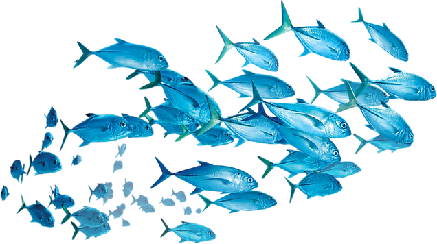 NicePng_fishes-png_471394.png