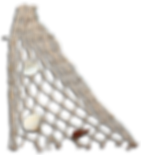 —Pngtree—shell_742821.png