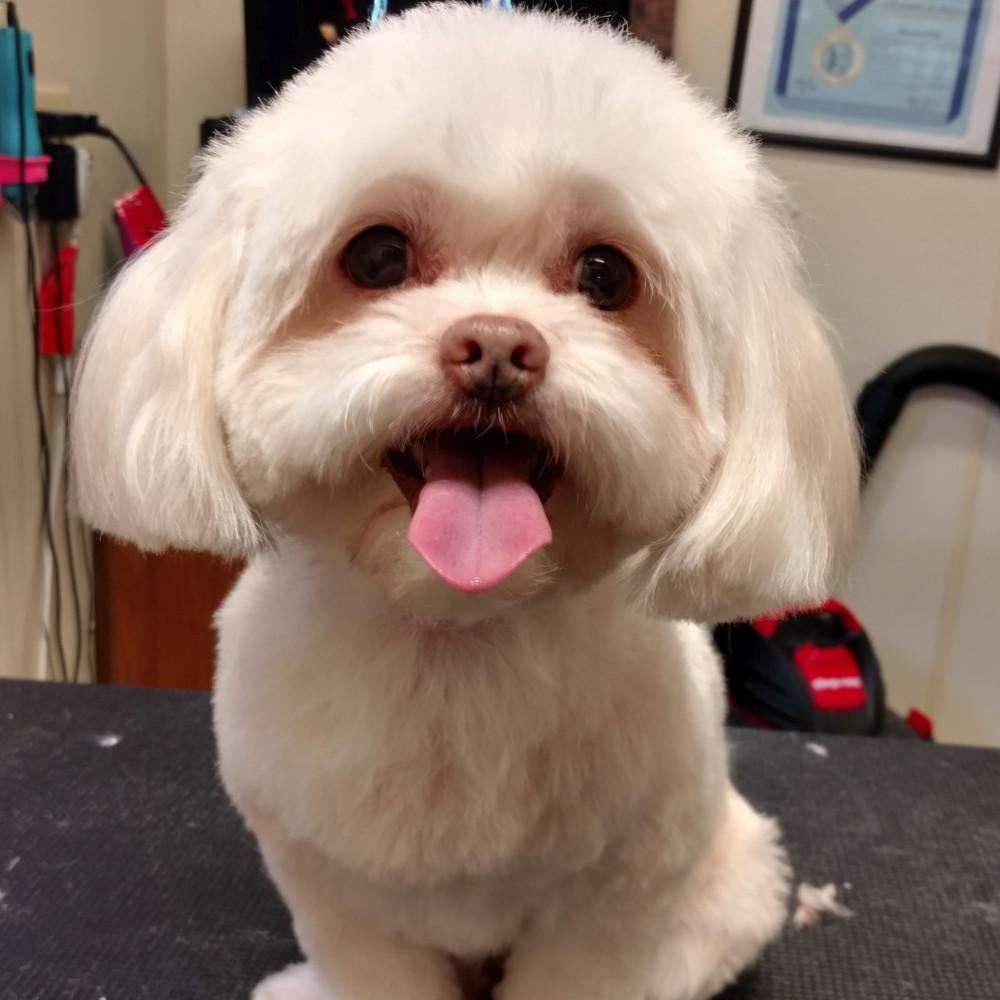 grooming10.jpg