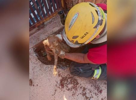 Em Águas Lindas, cão fica preso em tubulação de esgoto residencial