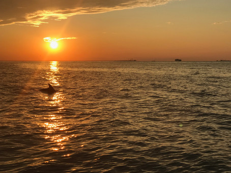 Bottlenose Dolphin Fun Facts