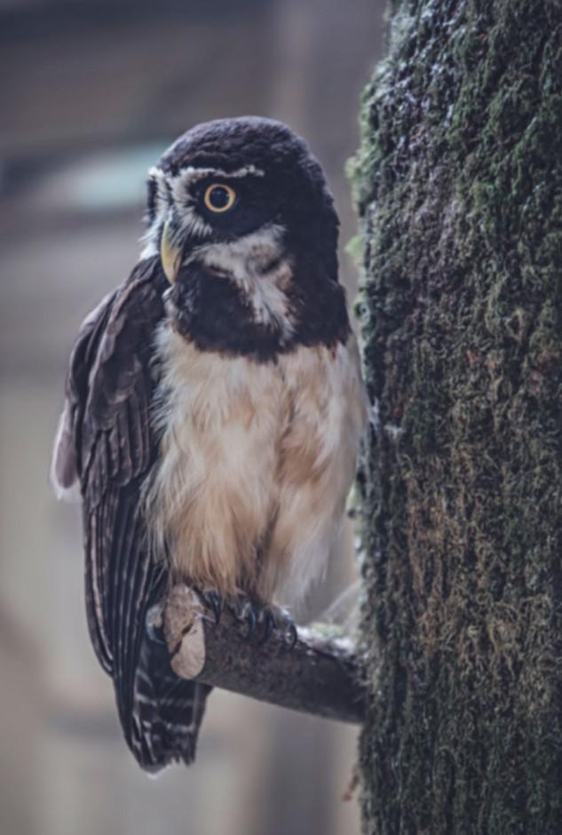 The-bird-(65).jpg