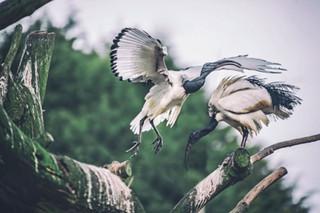 The-bird-(44).jpg