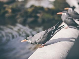 The-bird-(77).jpg