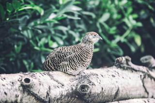 The-bird-(56).jpg