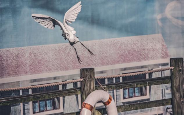 The-bird-(46).jpg