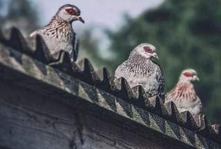 The-bird-(41).jpg