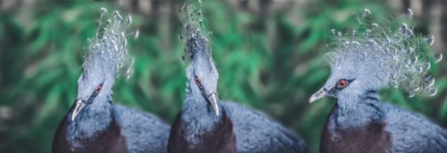 The-bird-(78).jpg