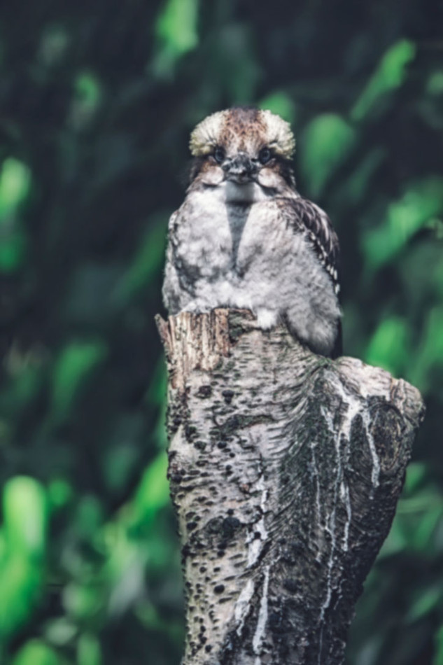 The-bird-(61).jpg
