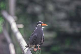 The-bird-(34).jpg