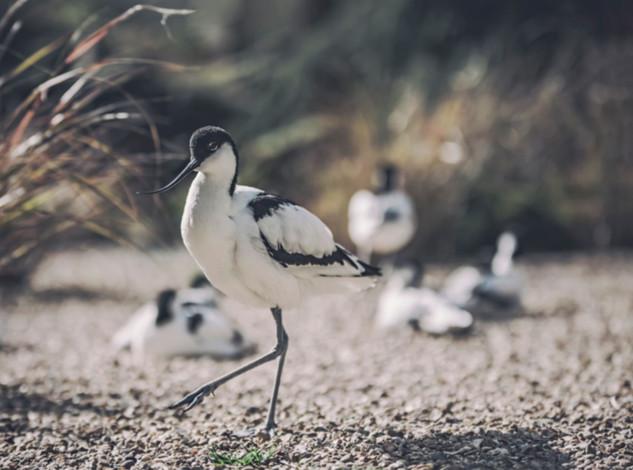 The-bird-(36).jpg