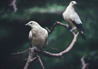 The-bird-(81).jpg