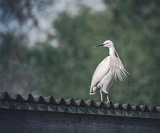 The-bird-(42).jpg