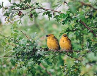 The-bird-(76).jpg